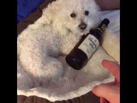 MY DOG IS AN ALCOHOLIC!