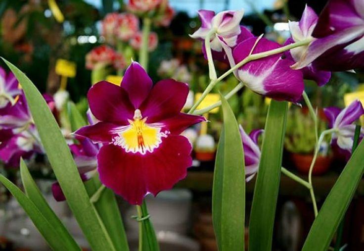 sobre Tipos de flores en Pinterest  Flores verdes, Navidad y Flor