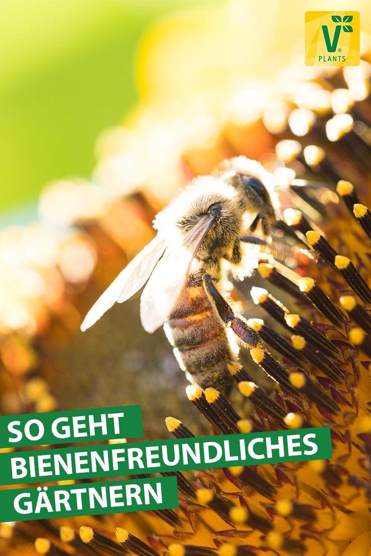 BIENENFREUNDLICH GÄRTNERN Die Biene hat es heut…