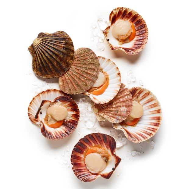 get a fishmonger to clean the scallops for you on the half shell that way you ll know they re really fresh fresh scallops cooking scallops in shell pinterest