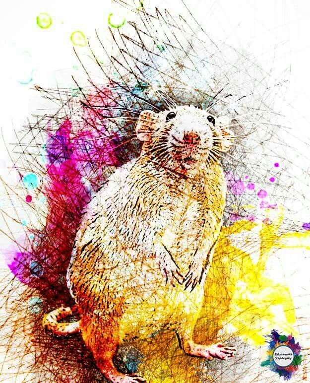 Created in Photoshop with lines and colors - beautiful rat for rat lowers!