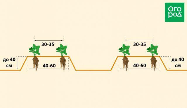 Выращивание клубники на высоких грядках по финской технологии | Земляника (Огород.ru)