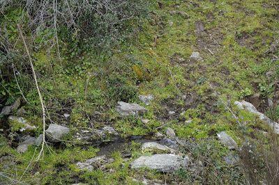 Saucelle: Camino del Monte Infiernitos en Saucelle.