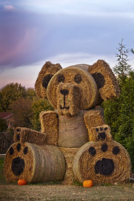 Hay Bale Teddy Bear by Big Grey Mare on Flickr. - Chronicles of a Love Affair with Nature