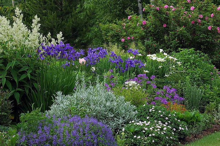 Лето в саду. Канадский частный сад. Обсуждение на LiveInternet - Российский Сервис Онлайн-Дневников