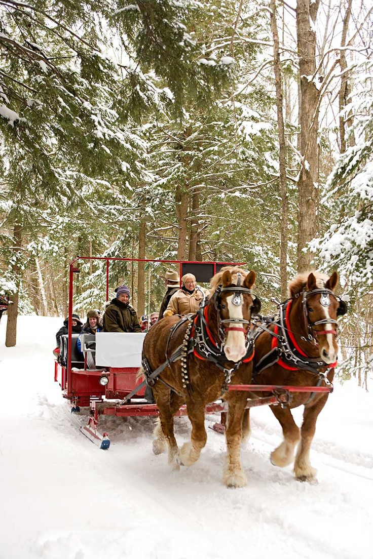 Horse Drawn Sleigh, A Traditional Way To Experience Lake ... |Horse Drawn Sleigh Rides Christmas