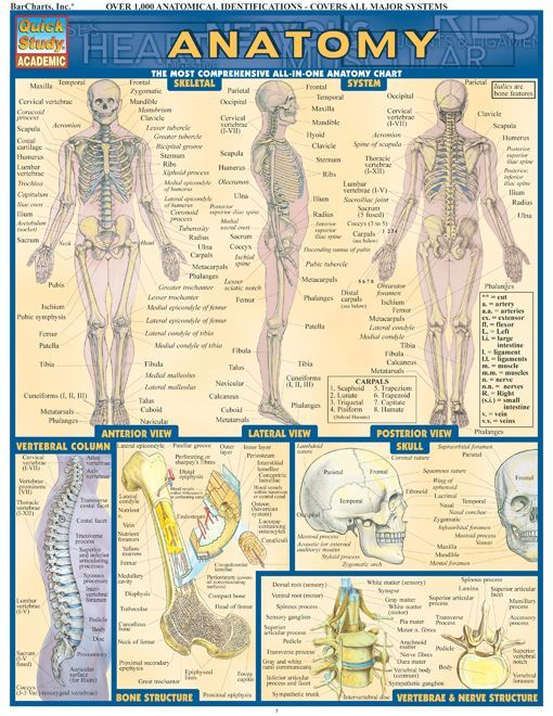 Anatomy 101 Quick Review Guide. Browse and download thousands of educational eBooks, worksheets, teacher presentations, practice tests and more at http://www.Examville.com #nursing #medicine #NCLEX #nurses #studyguide #testprep #downloads #ebooks #free #education #physiology #anatomy #teaching #homeschool #examville #MCAT #USMLE #Biology