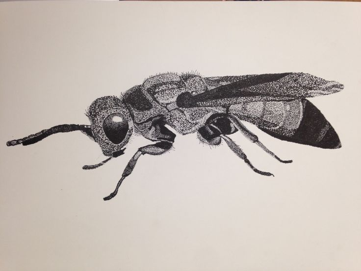 abeja, insecto, puntillismo, detalle, blanco y negro