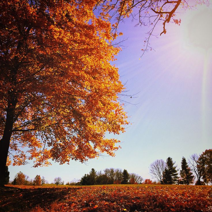 Solebury Sun by Mike Maney on 500px