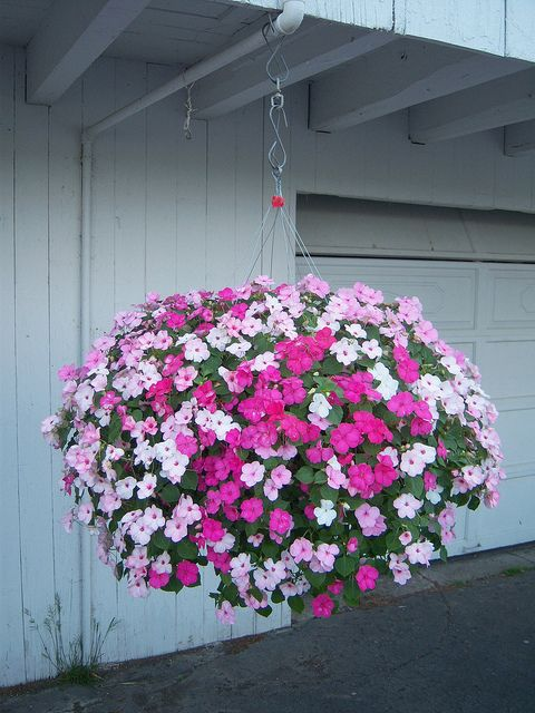 Impatients Hanging Basket...LOVE!
