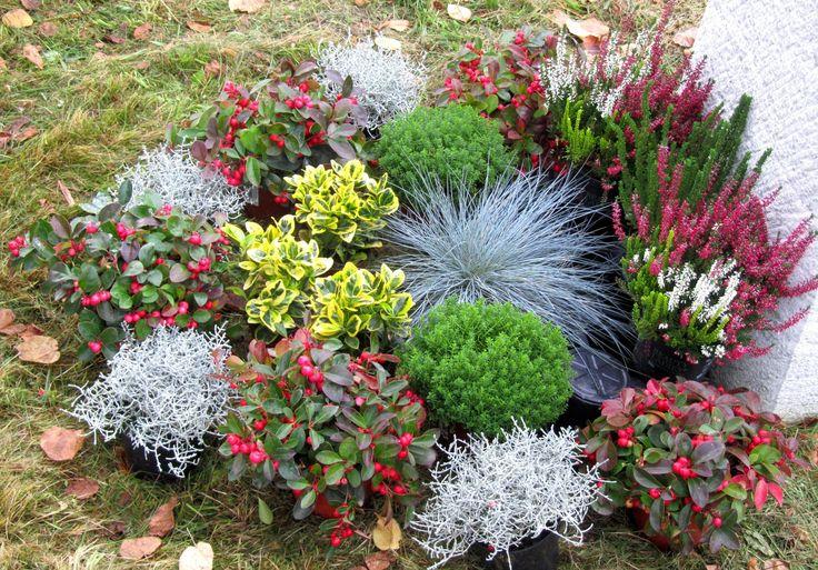 die besten 25 grabbepflanzung winter ideen auf pinterest grabgestaltung grabbepflanzung. Black Bedroom Furniture Sets. Home Design Ideas