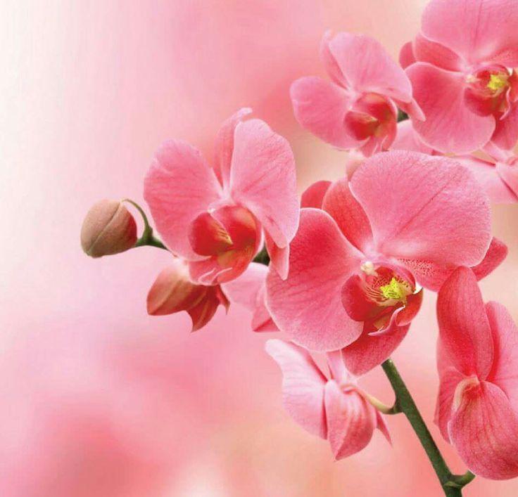 Выздоравливайте картинки, открытки с орхидеи