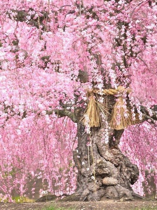 Suzuka-no-Mori Teien, Suzuka, Mie, Japan, 鈴鹿の森庭園, plum, 梅, garden