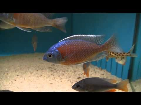 Best 25 tropical freshwater fish ideas on pinterest for Easy to care for fish