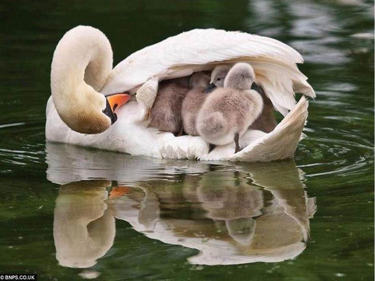 ya allah grant all mothers jannah Ameen