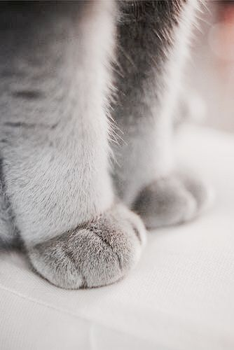 kitty paws.
