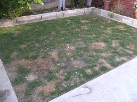 Good article on patching the yard & dog spot solutions
