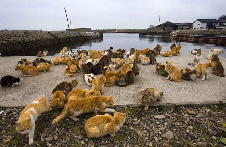 gatos Aoshima