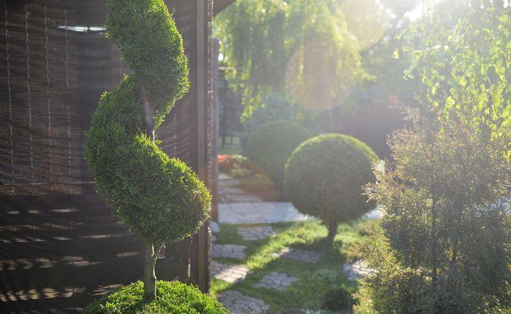 Спираль из туи. Топиарный сад