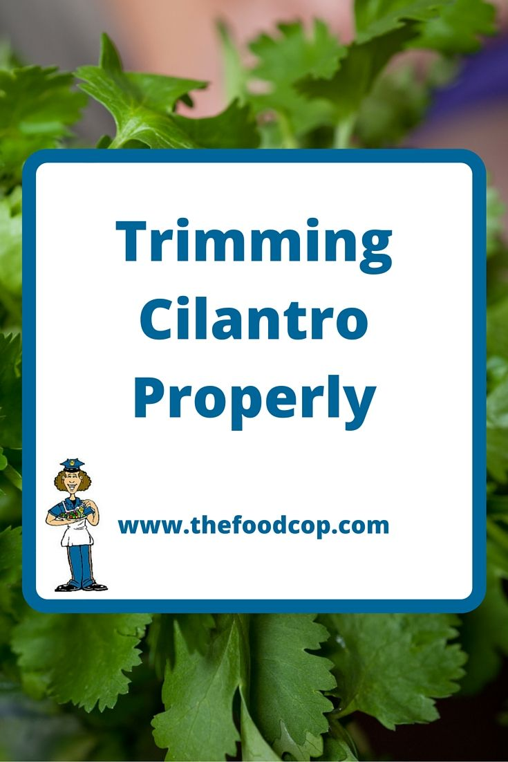Learn how to trim cilantro without bothering any new growth. http://www.thefoodcop.com/trimming-cilantro/
