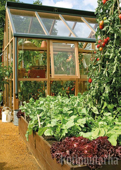 Upea jättituijasta rakennettu kasvihuone ja lava tietenkin sävy-sävyyn - mitä muuta kotipuutarhuri voi toivoa?
