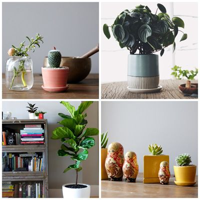 Country Living Mag - How to Choose a Houseplant (and Keep It Alive!)