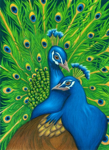 Tina Boadway - Prismacolor pencils <3 peacocks <3