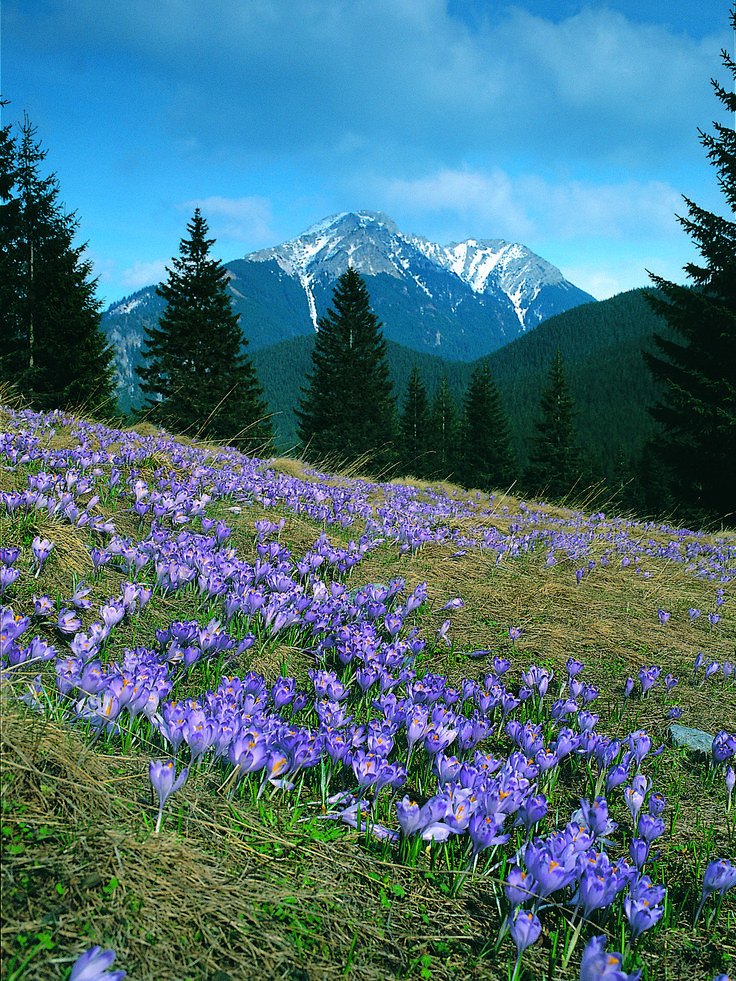 Tatry, Pologne - Explore the World with Travel Nerd Nici, one Country at a Time. http://TravelNerdNici.com