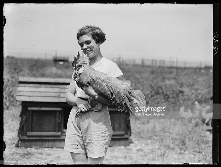 Young woman with cockerel, Hertfordshire, 15 June 1937. Woman holding a rooster at Ovaltine Farm, Kings Langley. Photograph by Daily Herald staff photographer Edward Malindine.