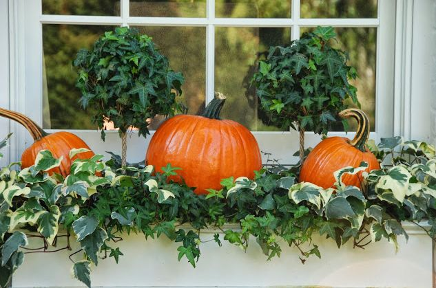 Keep your window boxes looking pretty through autumn by stuffing them with pumpkins surrounded by vines.....♔.....
