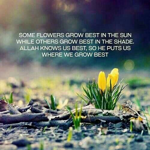 """Some flowers grow best in the sun while others grow best in the shade. Allah knows us best, so he puts us where we grow best."""