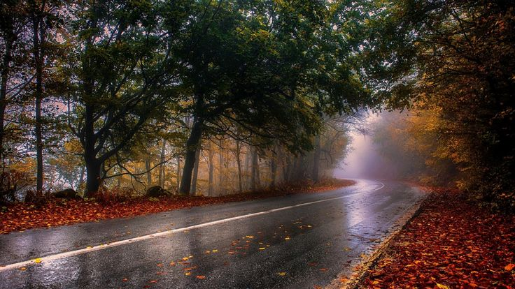 luz de sol Árboles paisaje bosque otoño hojas noche naturaleza reflexión invierno la carretera fotografía noche Mañana niebla Grecia mojado asfalto ligero árbol otoño hoja clima temporada bosque Fenómeno atmosférico Planta leñosa
