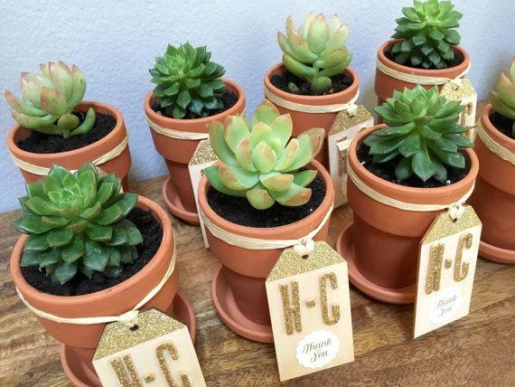 Mini vasi succulenti per bomboniere o decorazioni