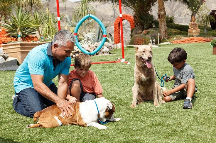 Cesar Milllan training on the perfect pet friendly turf from EasyTurf with the kids. Cesar loves the look and feel of EasyTurf. www.easyturf.com/cesarmillan l artificial turf l pet turf l backyard l outdoor living l synthetic grass l dog whisper l kid friendly l perfect for kids
