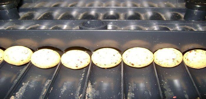 Matryca do rolawania kulek proteinowych czyli popularny roller to niezastąpione narzędzie do kulek proteinowych. http://karpiarstwo.pl/matryca-do-rolowania-kulek/