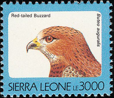 Red-necked Buzzard stamps - mainly images - gallery format