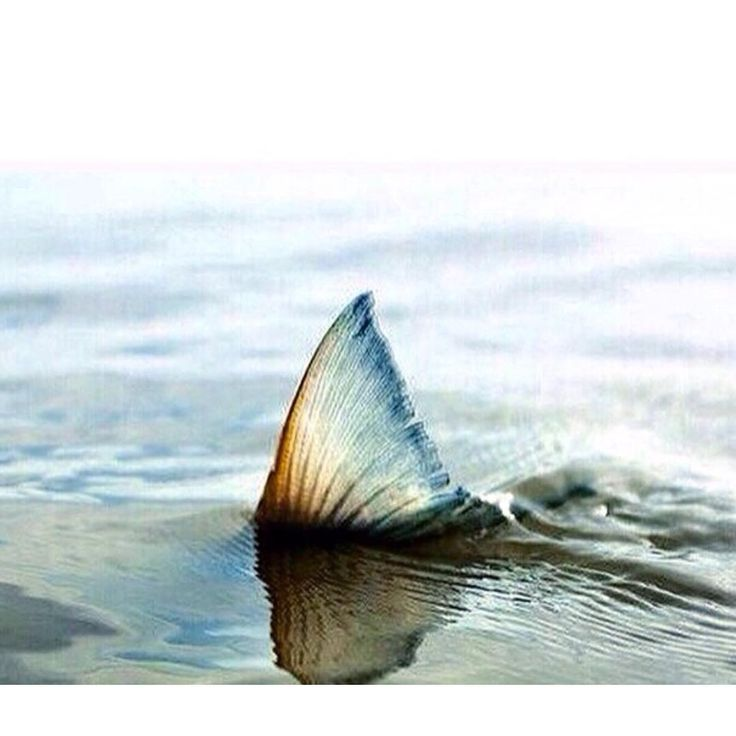 When I'm in the water this is all you'll see...