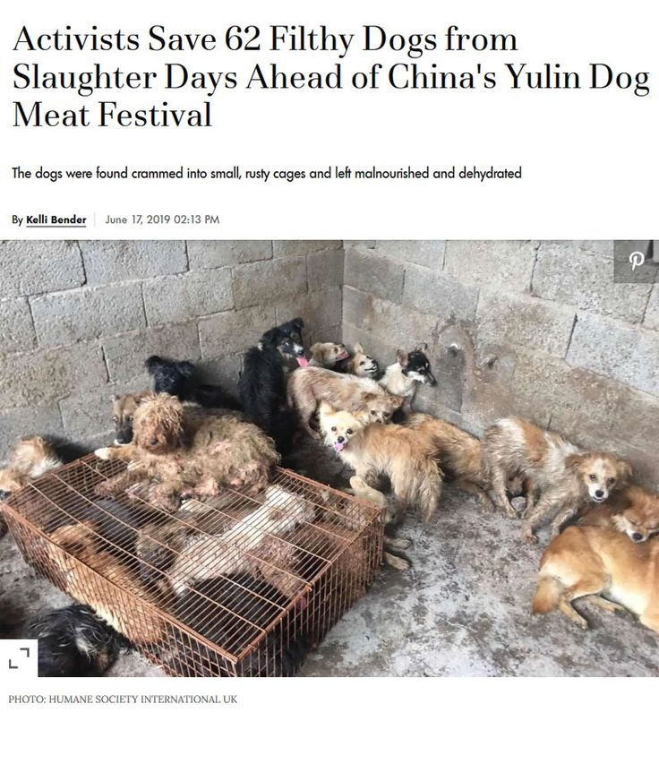 Activists Save 62 Filthy Dogs From Slaughter Days Ahead Of China S Yulin Dog Meat Festival In 2020 Dogs Emergency Care Malnourished