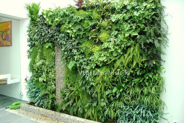 Les 70 meilleures images du tableau murs portails et - Mur vegetal interieur pas cher ...