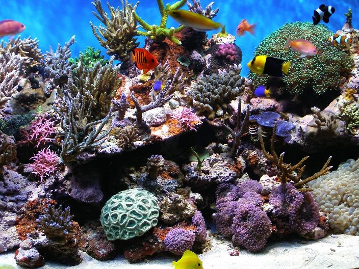 1000 Images About Reef Tanks On Pinterest Salts