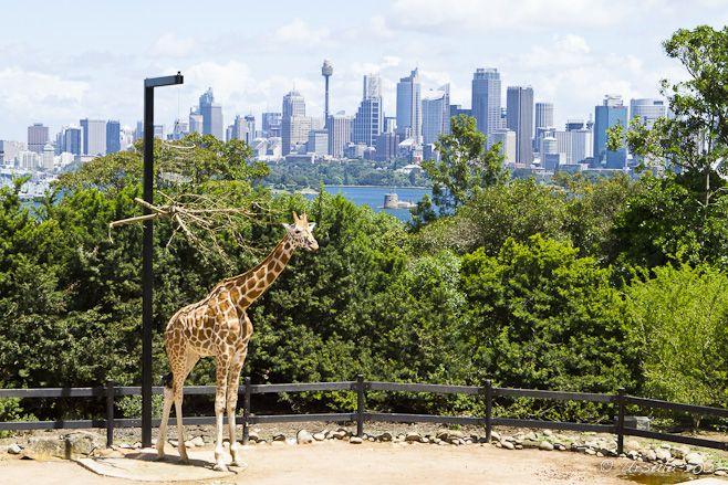Taronga Zoo #Sydney #Australia    Location, Location, Location!