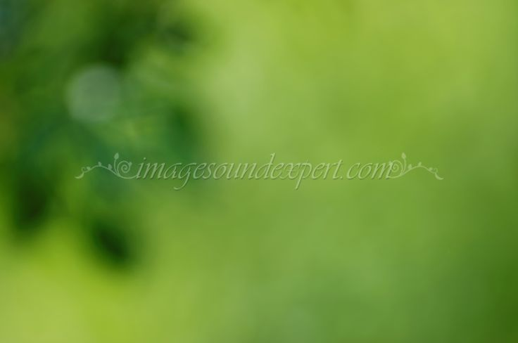 green spring blur   background