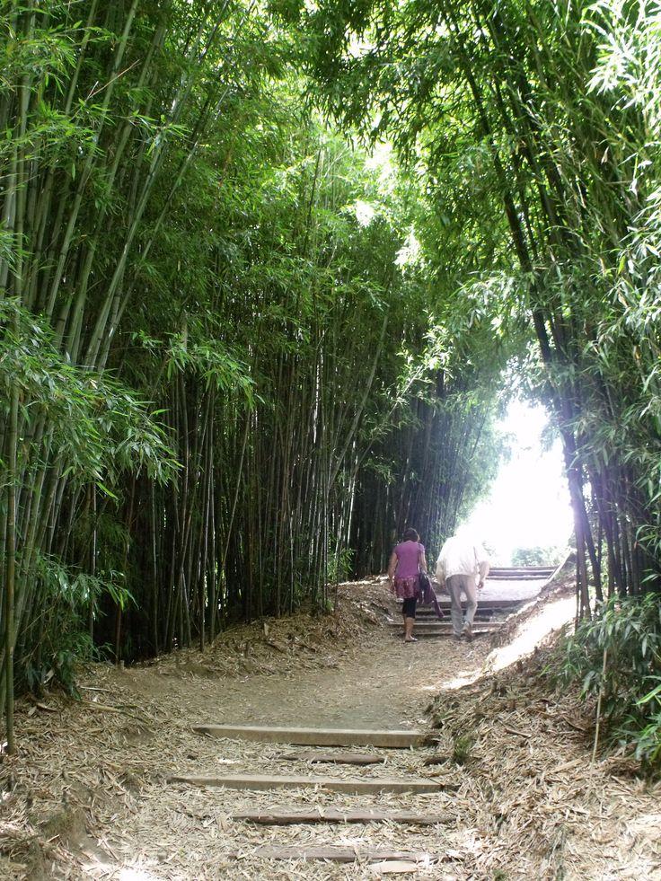 Bamboo grove, Chinese Scholars Garden