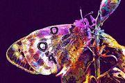 """New artwork for sale! - """" Apollo Butterfly by PixBreak Art """" - http://ift.tt/2sj2LiY"""