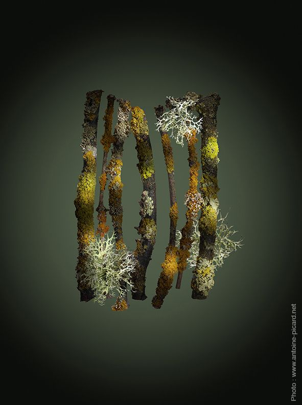 Photo: www.antoine-picard.net Végétaux, bois, mousses et lichens en clair-obscur Plants, wood, moss, lichen with chiaroscuro effect