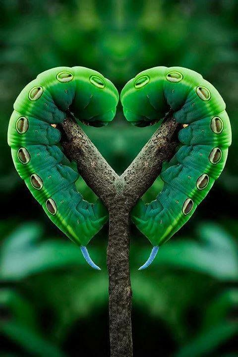 Hearts in nature - Nature is amazing and awesome. Take the time to look around you and see the beauty.