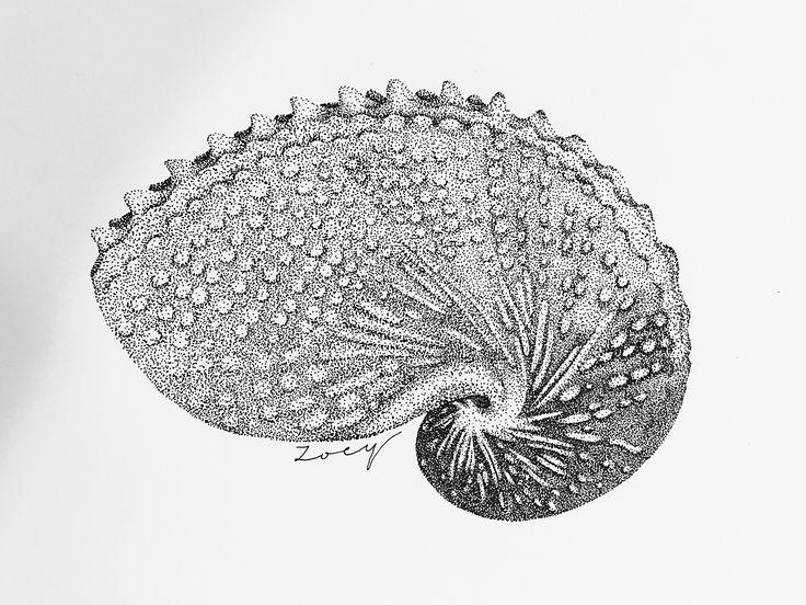• Shell • Dot drawing • Black ink