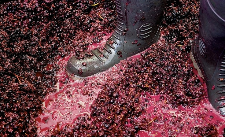 It's all part of the process of making great wine