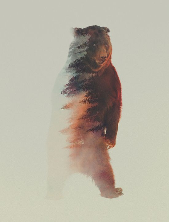 Poster | STANDING BEAR von Andreas Lie | more posters at http://moreposter.de