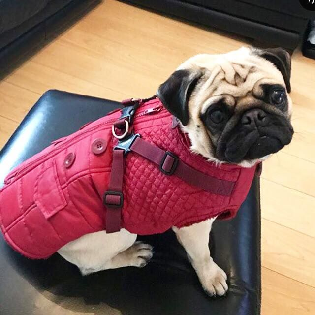 Puppia Fleece Lined Wilkes Coat With A Built In Harness Available